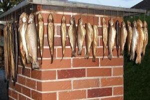 Forellen nach dem Räuchern im gemauerten Räucherofen